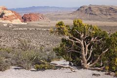 Las Vegas Nevada Red Rock Desert 9892.jpg - stock photo