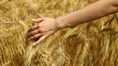 Hand and wheat (HD 1080) Stock Footage