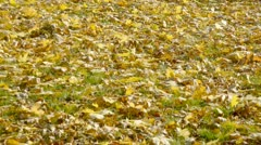 Close-up of Woman legs in black high heels boots walking over fallen leaves 1-3 Stock Footage
