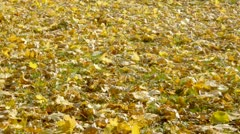Close-up of Woman legs in black high heels boots walking over fallen leaves 5-2 Stock Footage