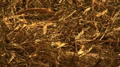 Hay - stock footage