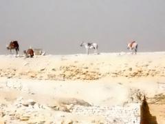 DSCN0321E1 DESERT HORSES AND CAMELS.jpg Stock Photos