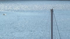 Shimmering water with a boat and bird flying, sail, sailboat, gull, seagull Stock Footage