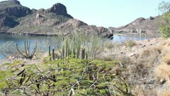 Nature scene of mountain, water, desert, cactus, bushes, bird flying Stock Footage