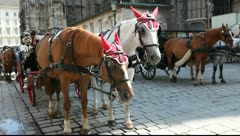 Horse from a fiacre in front of the Stephansdom in Vienna Stock Footage
