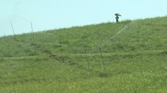 Sugarcane Irrigation  - stock footage