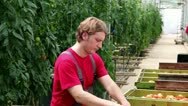 Greenhouse Worker Stock Footage