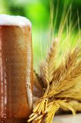 Beer and spikes of cereal Stock Photos