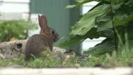 Baby Rabbit Stock Footage