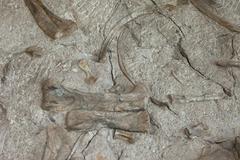 Dinosaur National Monument fossil Vernal - stock photo
