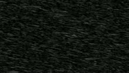 Snow Storm Isolated on Black Background FULL HD Stock Footage