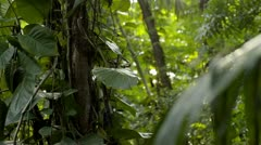 Tropical jungle tree - dolly Stock Footage