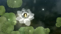 Beautiful Lotus Blossom Stock Footage