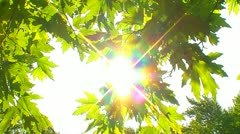 Green leaves with sun 13 Stock Footage