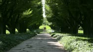 Tree path zoom Stock Footage