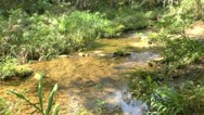 Stock Video Footage of Small creek in Topes de Collantes, Cuba