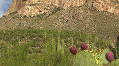 Tucson Arizona Scenic Stock Footage