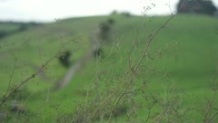 Artsy shot of branches before a blurry hill in New Zealand - stock footage