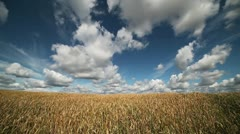 Wheat field. Stock Footage