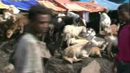 Stock Video Footage of African goat Market Pan road to goat MS