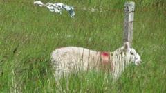 Wicklow Landscape Stock Footage