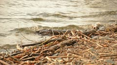 Stock Video Footage of driftwood on the beach