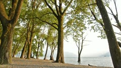trees on the beach - stock footage