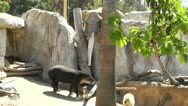 Stock Video Footage of San Diego Zoo 13 elephant tapir capybara