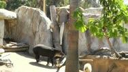 San Diego Zoo elephant tapir capybara Stock Footage