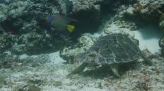 Turtle cozumel mexico Stock Footage