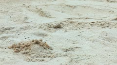 Crab digging a hole Stock Footage