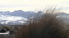 Tussock with Mt Tongariro in the background Stock Footage