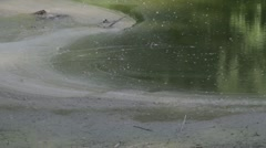 Stock Footage - Drought in area - Stagnant water in pond - stock footage