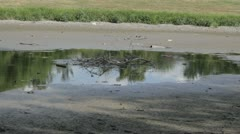 Stock Footage - Drought in Midewest USA - Stagnant water in pond - cracked - stock footage