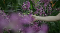 Hand on the flowers in park Stock Footage