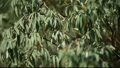 Green leaves swinging in the wind. Stock Footage