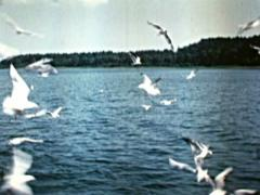 Flying Seagulls over Water Lake - Vintage 16mm Film Stock Footage