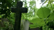 Stock Video Footage of Overgrown Forgotten Cemetery - Crucifix, bramble and flies