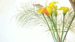 flower arranging - stock footage
