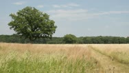 Open Prarie Field with a tree in the center Stock Footage