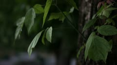 Leaves moving in the wind Stock Footage