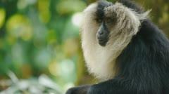 Monkey Looking Stock Footage