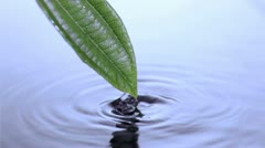 Leaf moving in super slow motion Stock Footage