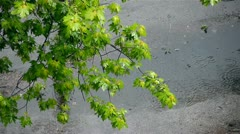 Top view of green tree branch while raining Stock Footage