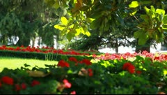 City park in Madrid Stock Footage