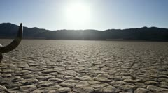 Pan of Skull on the Desert Floor - Death Valley - stock footage