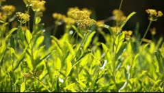 Yellow flowers and morning dew in park Stock Footage