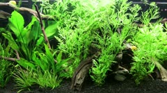 Freshwater Planted Tank - stock footage
