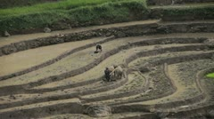 Rice plantations in Indonesia - stock footage