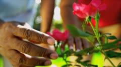 Senior Ethnic Hands Tending Flower Bushes Stock Footage